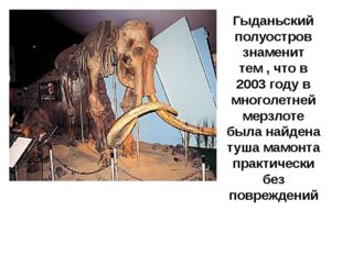 Гыданьский полуостров знаменит тем , что в 2003 году в многолетней мерзлоте б