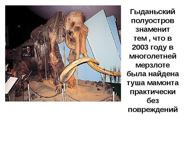 Гыданьский полуостров знаменит тем , что в 2003 году в многолетней мерзлоте б...