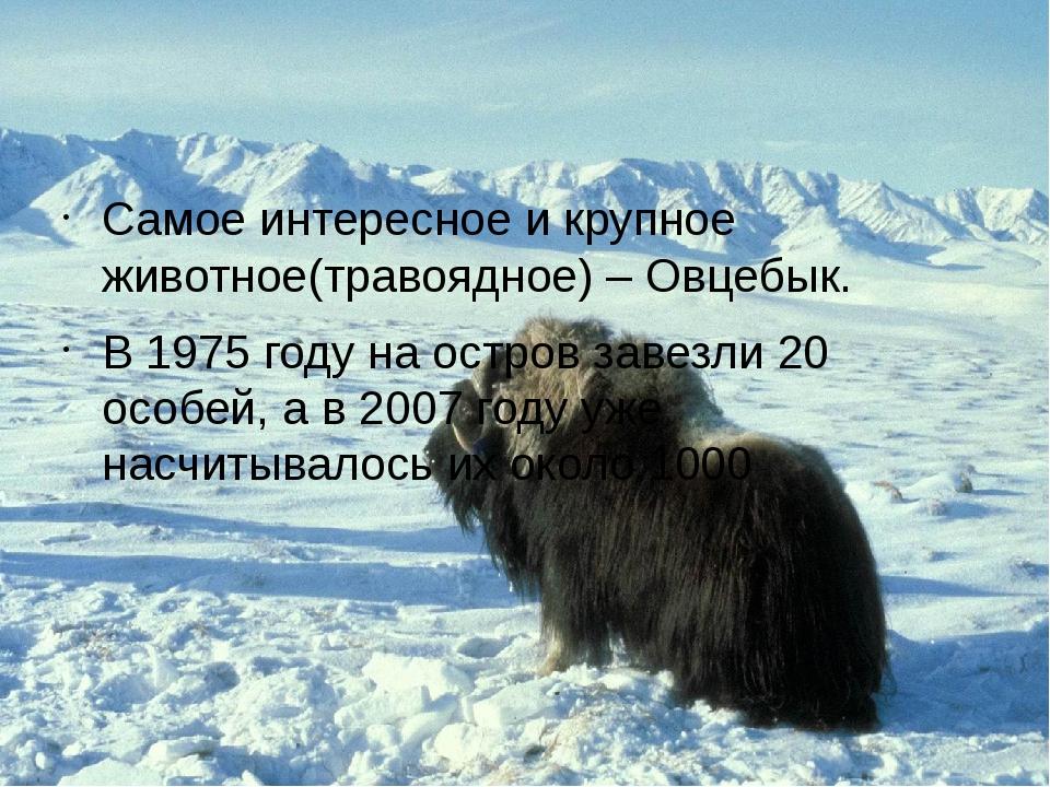 Самое интересное и крупное животное(травоядное) – Овцебык. В 1975 году на ос...
