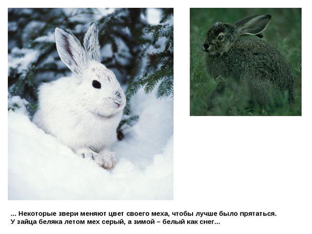 ... Некоторые звери меняют цвет своего меха, чтобы лучше было прятаться. У за...