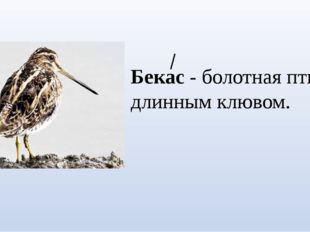 Бекас - болотная птица с длинным клювом.