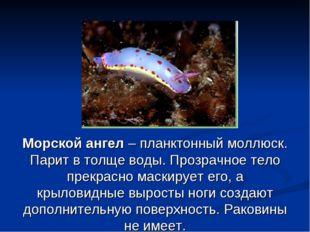 Морской ангел – планктонный моллюск. Парит в толще воды. Прозрачное тело прек