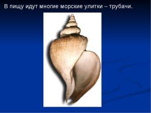 В пищу идут многие морские улитки – трубачи.