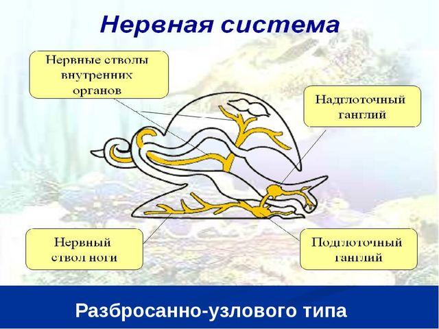 Разбросанно-узлового типа