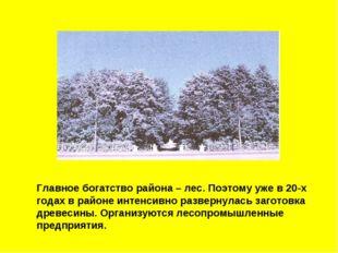 Главное богатство района – лес. Поэтому уже в 20-х годах в районе интенсивно