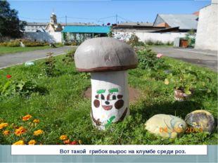 Вот такой грибок вырос на клумбе среди роз.