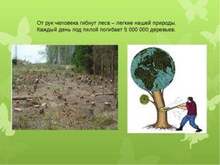 От рук человека гибнут леса – легкие нашей природы. Каждый день под пилой пог