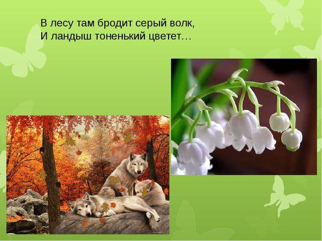 В лесу там бродит серый волк, И ландыш тоненький цветет…