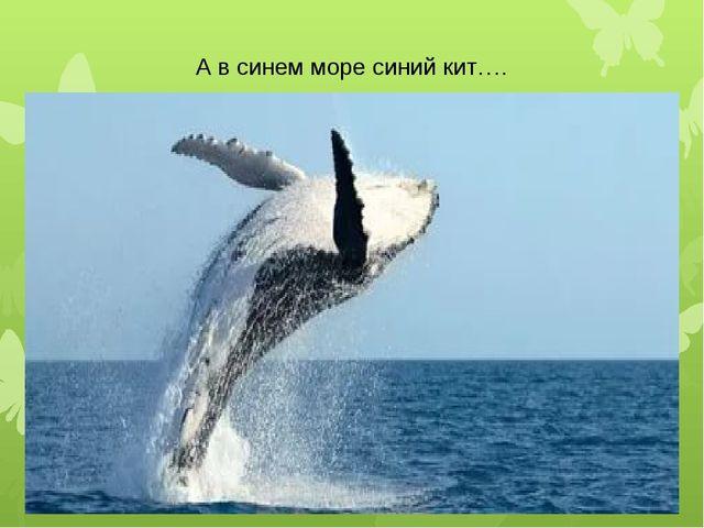 А в синем море синий кит….