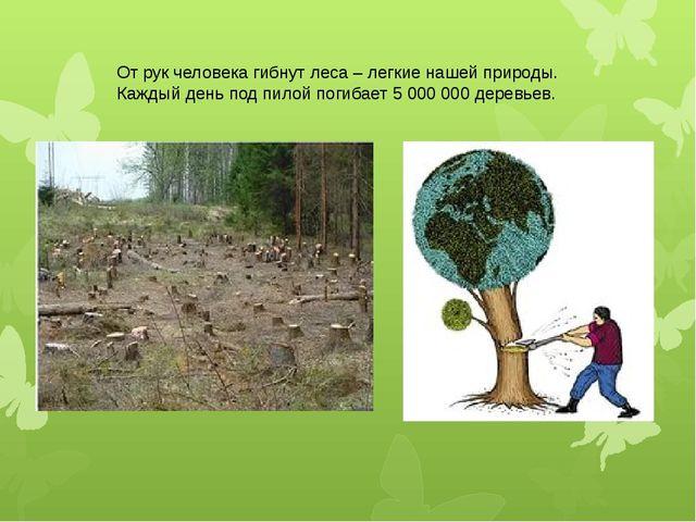 От рук человека гибнут леса – легкие нашей природы. Каждый день под пилой пог...
