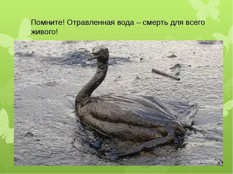 Помните! Отравленная вода – смерть для всего живого!