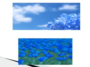 Цветы бирюзовы,