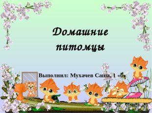 Выполнил: Мухачев Саша, 1 «б» Домашние питомцы