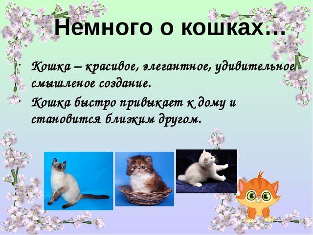 Немного о кошках… Кошка – красивое, элегантное, удивительное смышленое создан...