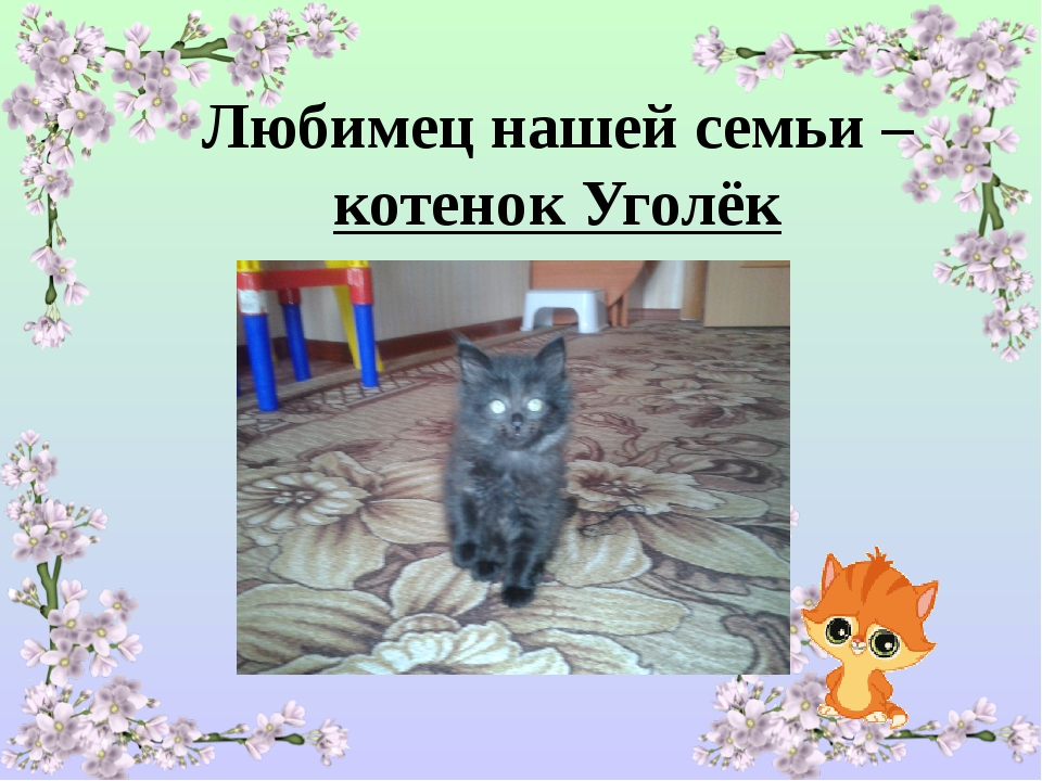 Любимец нашей семьи – котенок Уголёк