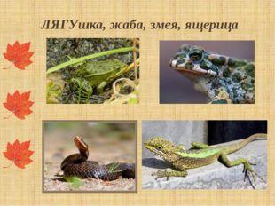 ЛЯГУшка, жаба, змея, ящерица