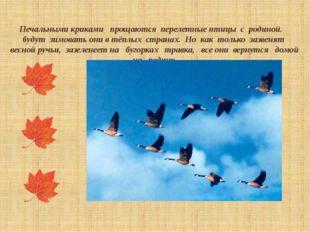 Печальными криками прощаются перелетные птицы с родиной. будут зимовать они