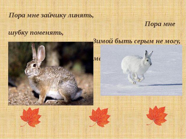 Пора мне зайчику линять, Пора мне шубку поменять, Зимой быть серым не могу, М...