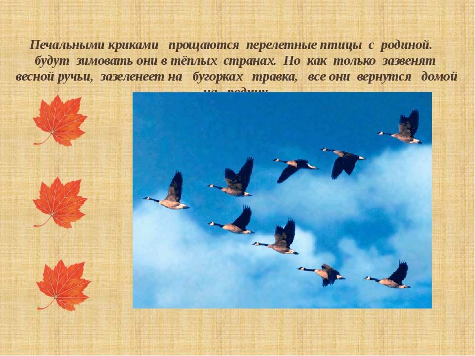 Печальными криками прощаются перелетные птицы с родиной. будут зимовать они...