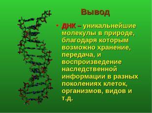 Вывод ДНК – уникальнейшие молекулы в природе, благодаря которым возможно хран