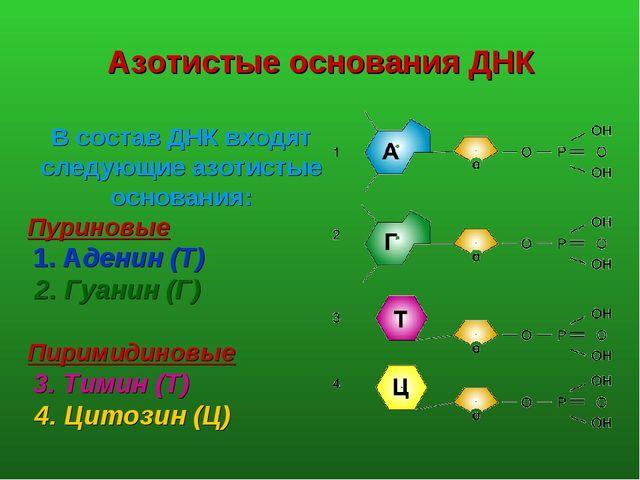 Азотистые основания ДНК В состав ДНК входят следующие азотистые основания: П...