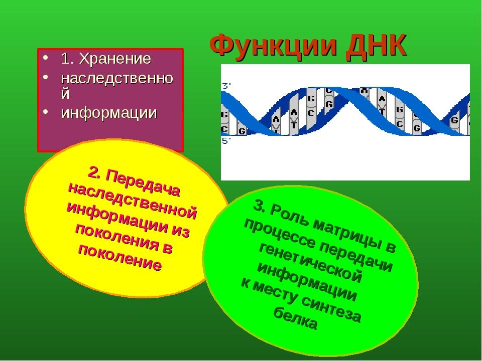 Функции ДНК 1. Хранение наследственной информации 2. Передача наследственной...