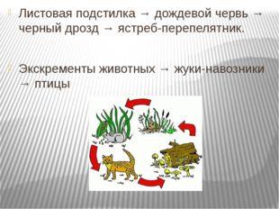 Листовая подстилка → дождевой червь → черный дрозд → ястреб-перепелятник. Экс