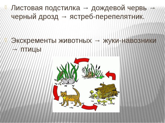 Листовая подстилка → дождевой червь → черный дрозд → ястреб-перепелятник. Экс...