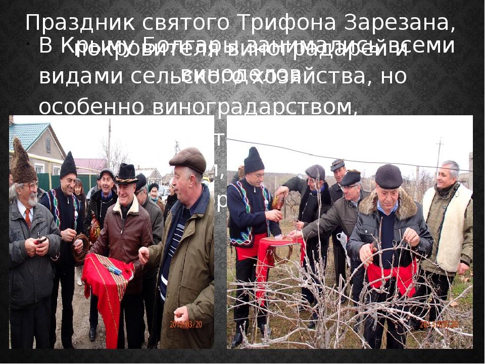 В Крыму Болгары занимались всеми видами сельского хозяйства, но особенно вино...