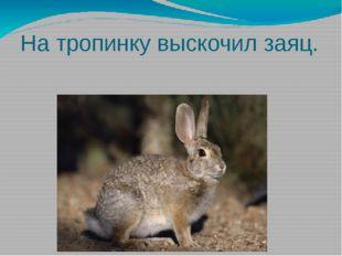 На тропинку выскочил заяц.