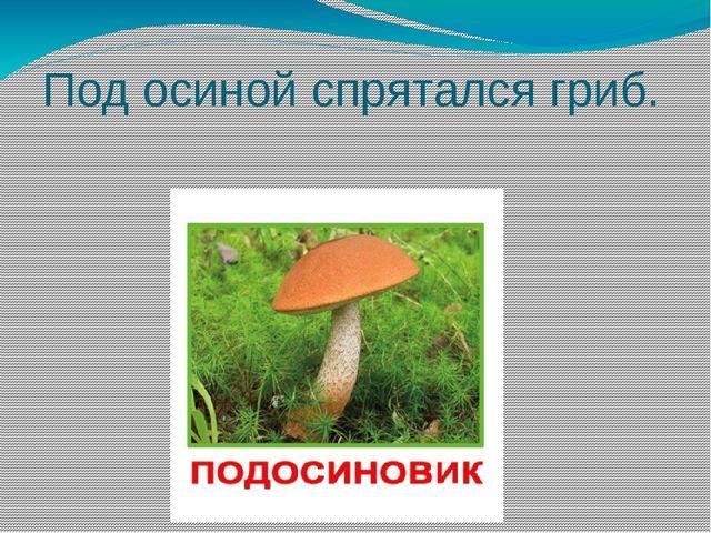 Под осиной спрятался гриб.