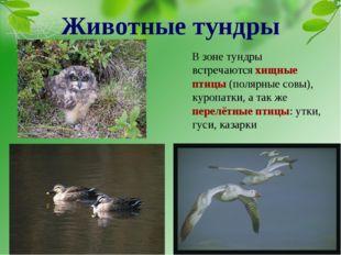 В зоне тундры встречаются хищные птицы (полярные совы), куропатки, а так же п