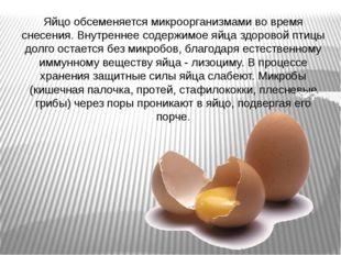Яйцо обсеменяется микроорганизмами во время снесения. Внутреннее содержимое я