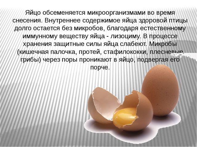 Яйцо обсеменяется микроорганизмами во время снесения. Внутреннее содержимое я...