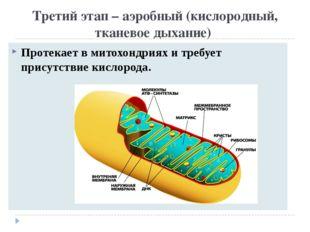 Третий этап – аэробный (кислородный, тканевое дыхание) Протекает в митохондри