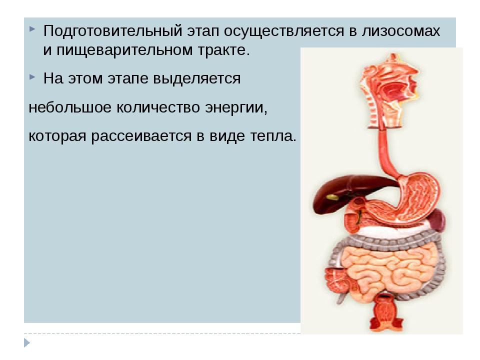 Подготовительный этап осуществляется в лизосомах и пищеварительном тракте. На...