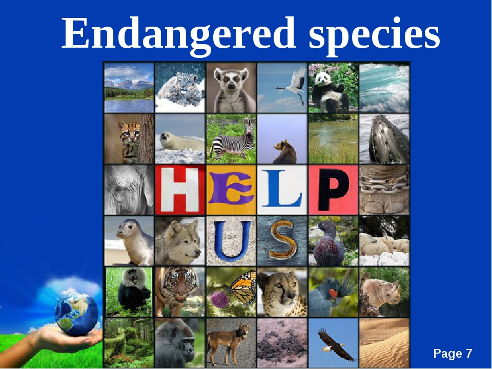 Endangered species Free Powerpoint Templates Page *