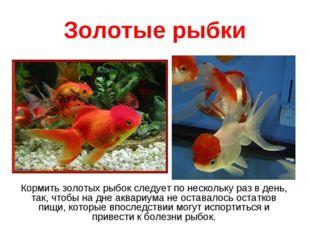 Золотые рыбки Кормить золотых рыбок следует по нескольку раз в день, так, что