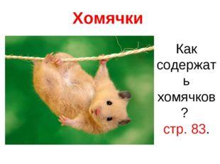 Хомячки Как содержать хомячков? стр. 83.