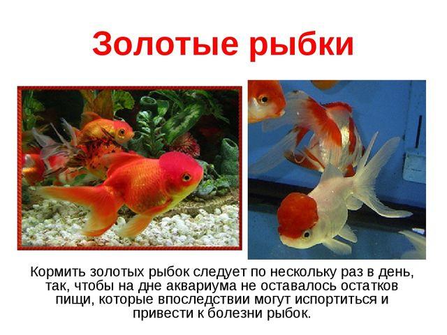 Золотые рыбки Кормить золотых рыбок следует по нескольку раз в день, так, что...