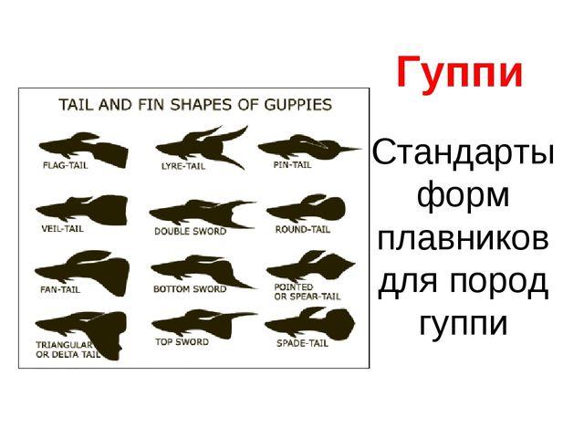 Стандарты форм плавников для пород гуппи Гуппи