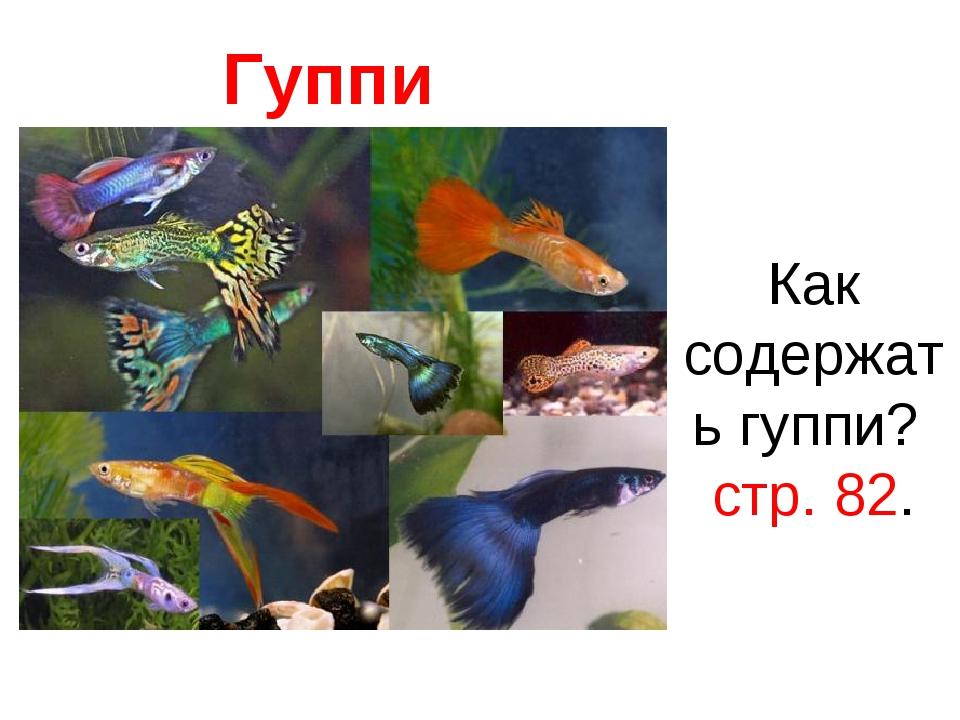 Гуппи Как содержать гуппи? стр. 82.