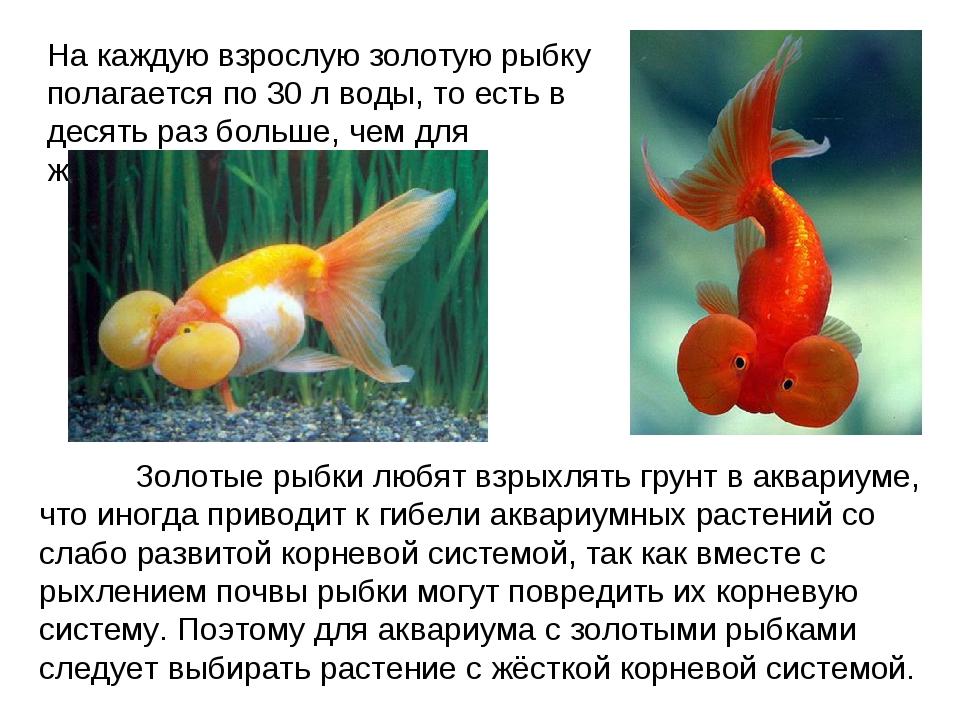 На каждую взрослую золотую рыбку полагается по 30 л воды, то есть в десять ра...
