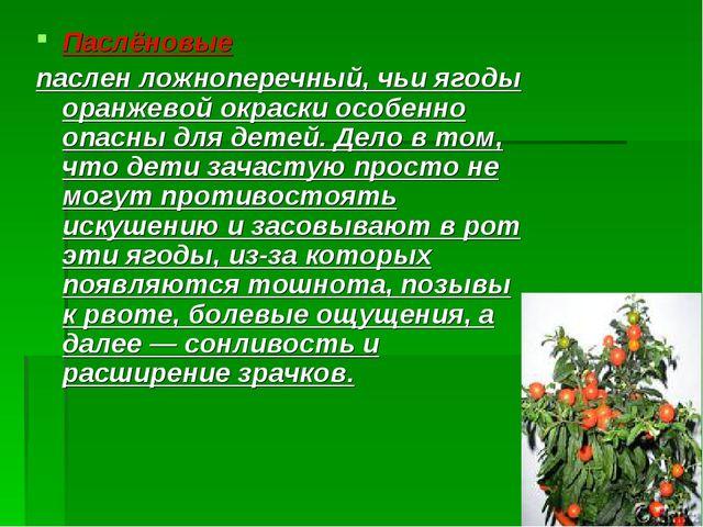 Паслёновые паслен ложноперечный, чьи ягоды оранжевой окраски особенно опасны...