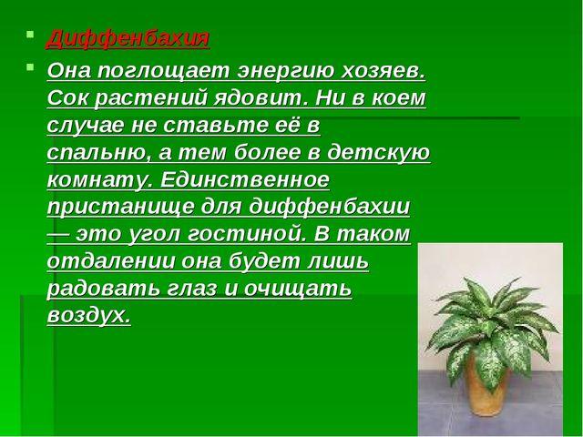 Диффенбахия Она поглощает энергию хозяев. Сок растений ядовит. Ни в коем случ...