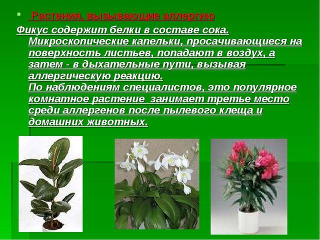 Растения, вызывающие аллергию Фикус содержит белки в составе сока. Микроскоп...