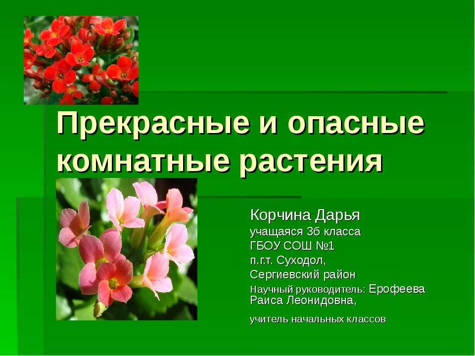 Прекрасные и опасные комнатные растения Корчина Дарья учащаяся 3б класса ГБОУ...