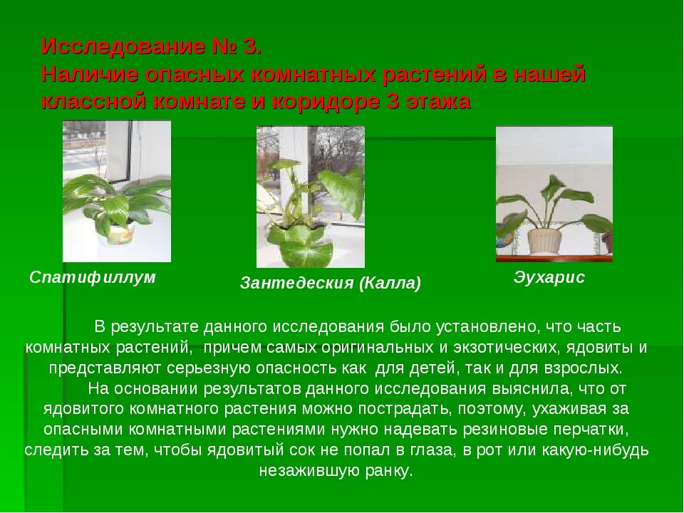 Исследование № 3. Наличие опасных комнатных растений в нашей классной комнате...