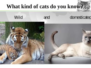 What kind of cats do you know? Wild and domesticated