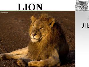 LION ЛЕВ